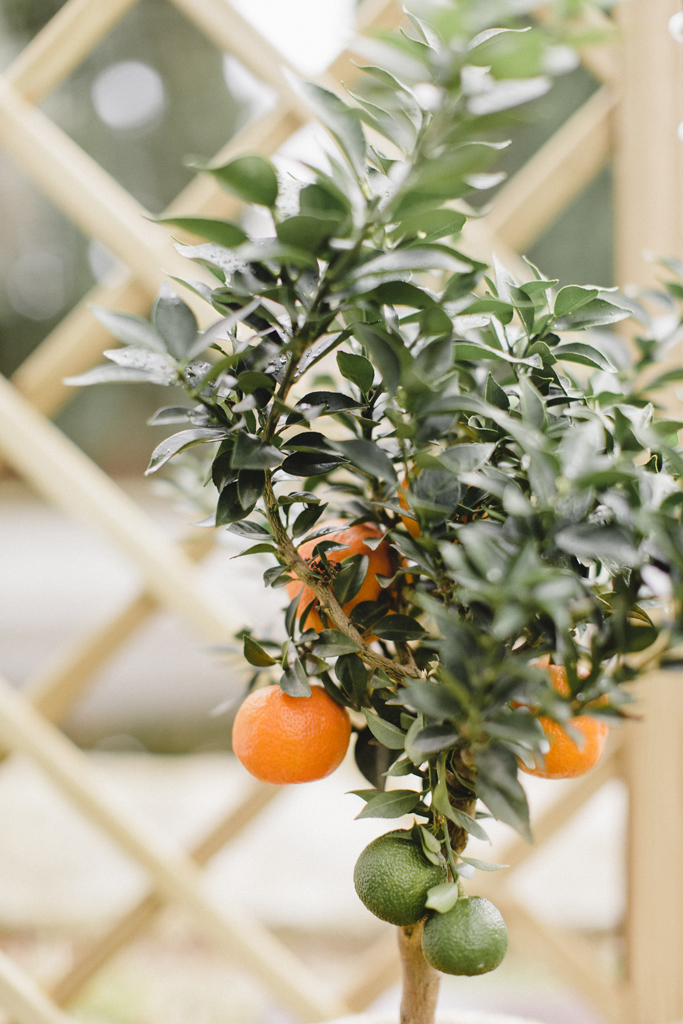 orange tree for wedding decor ceremony backdrop